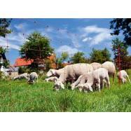 Elektriskā gana siets aitām ClassicNet 0,9x50m ar dubultajiem asmeņiem